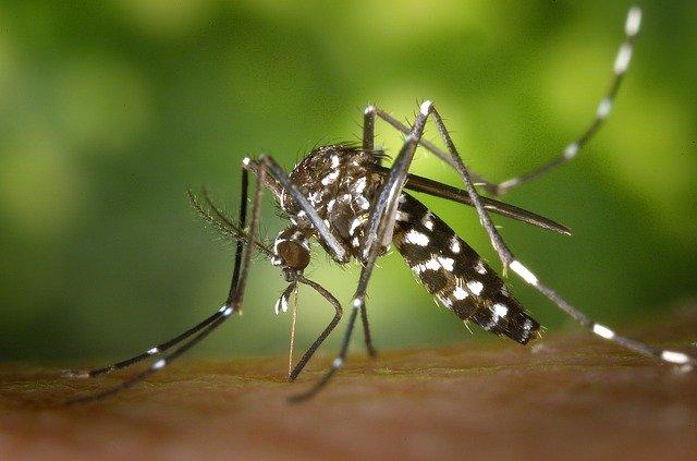 Тигрест комарец